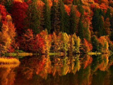 Autumn scenery at the lake, reflection in the water of colorful, vibrant forest trees
