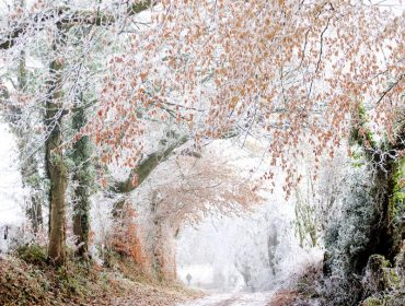A heavily frost covered country road.