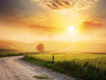 Winding Farm Road through Foggy Landscape - fields, meadow, sun during sunrise