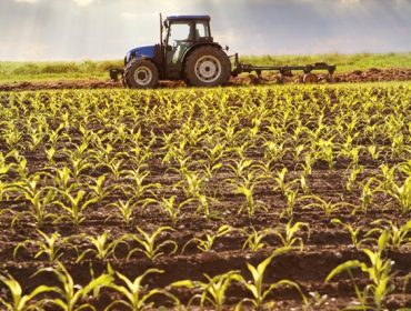 Tractor working on the field with young plants in sunlight