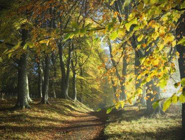 Dirt track through colourful autumn woodland with dappled sunlight - Ross-shire, Scotland, UK.